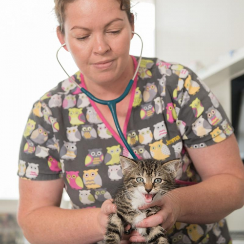 Veterinary Hospital Whangaparaoa